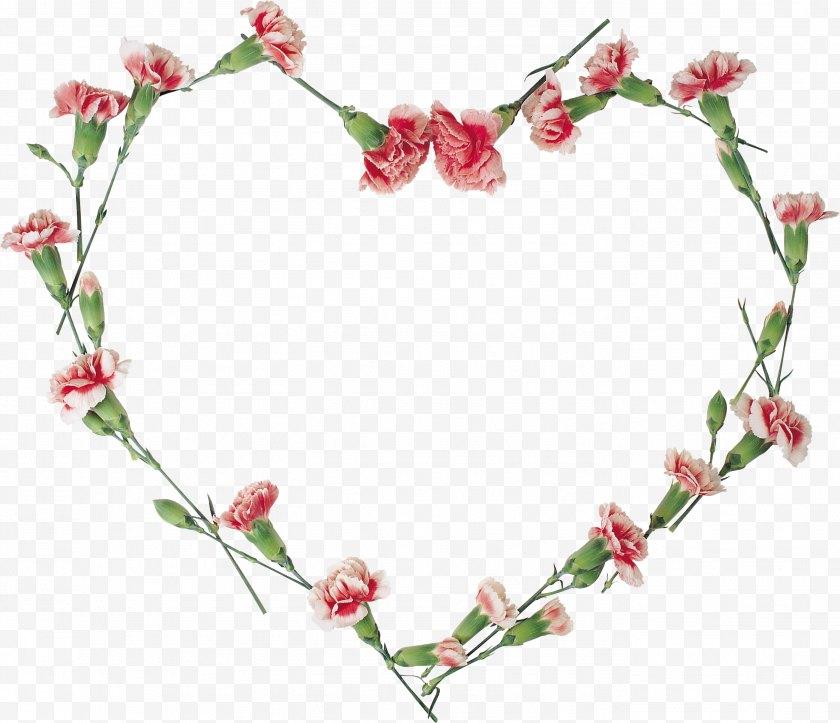 Valentine S Day - Floral Design Flower Clip Art - Pink - Carnations Vector Free PNG