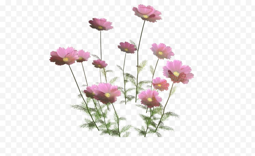 Floral Design - Lily Flower Cartoon - Perennial Plant Pink Family Free PNG