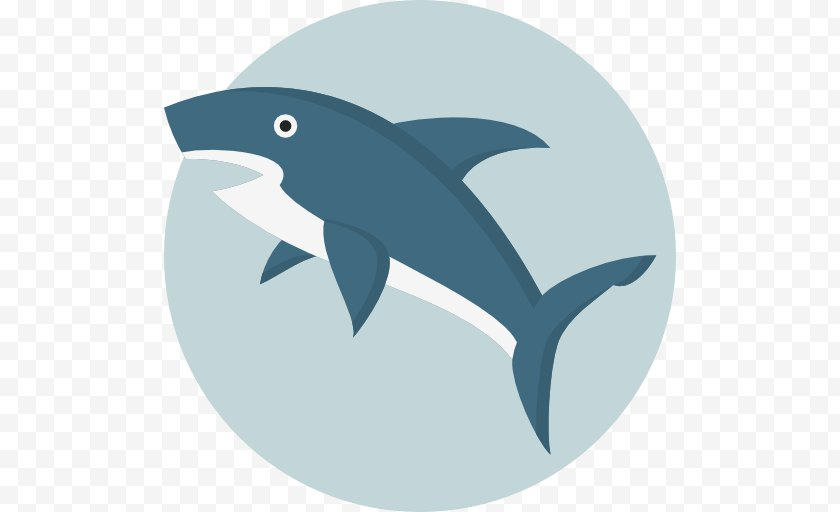 Blog - Marine Mammal - Shark - Dolphin Free PNG