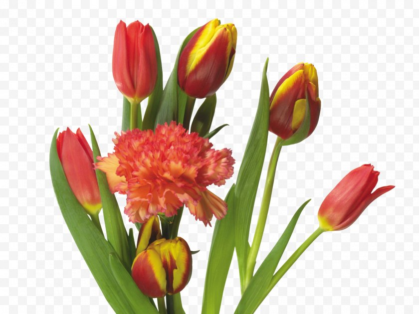 Floristry - Tulip Mania Flower Bouquet - Tulips And Carnations Free PNG