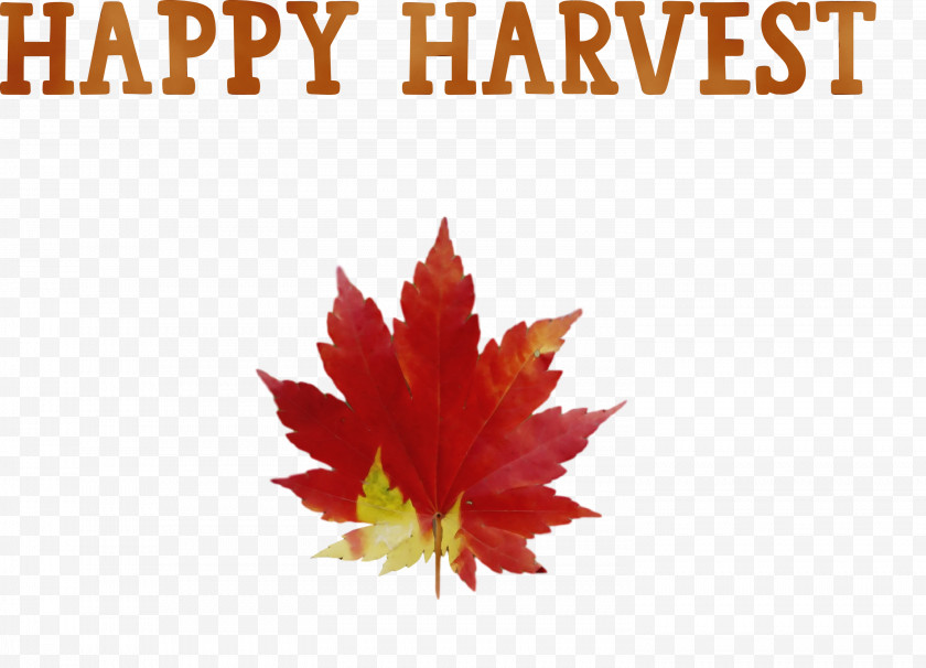 Leaf Drawing Season Autumn Text Free PNG