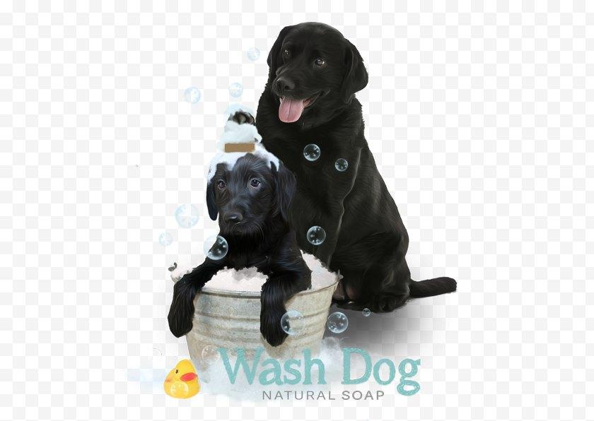 Retriever - Labrador Flat-Coated Puppy Borador Dog Breed Free PNG