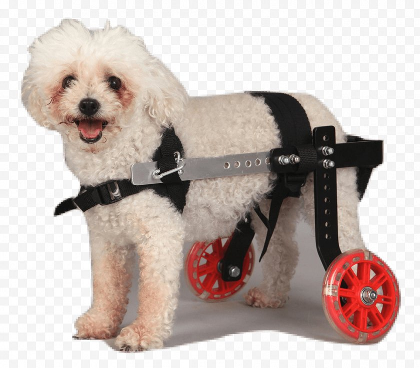 Orthopaedics - Schnoodle Wheelchair Puppy Dog Breed Companion Free PNG