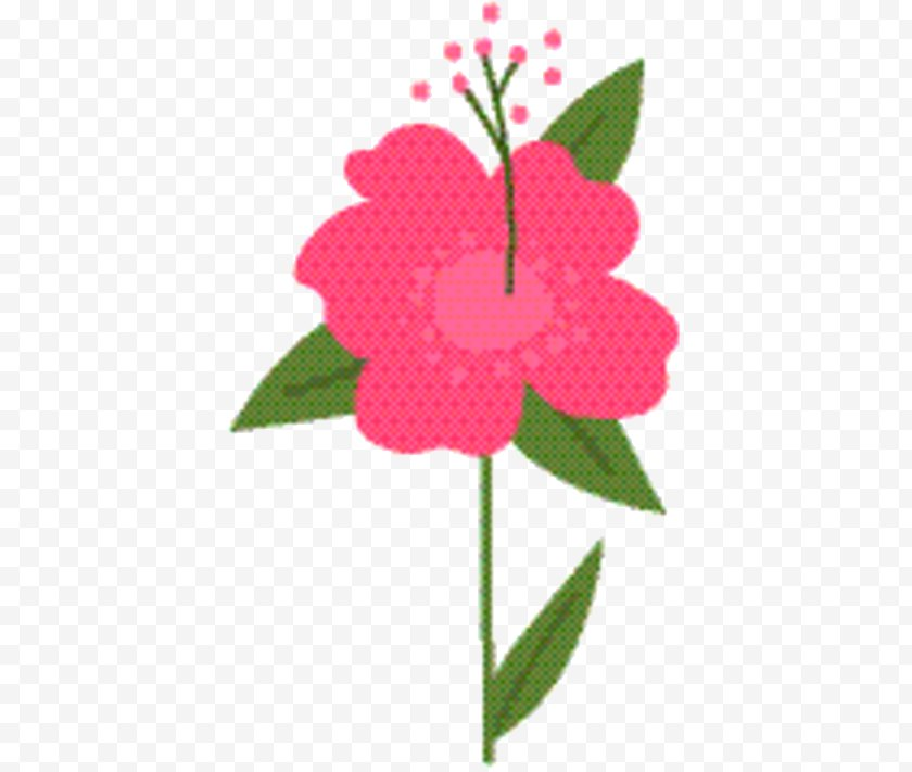 Flowering Plant - Pink Flower Cartoon - Impatiens - Mallow Family Free PNG